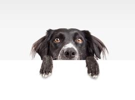 Myocardinfarct, CVA: een hond aanraden?