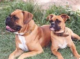 Honden in MRI: hygiënischer dan mannen met baard…