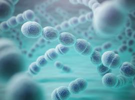 Vaccin antipneumococcique: que dit l'OMS dans le contexte de la pandémie?
