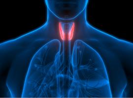 Subklinische hypothyreoïdie niet behandelen