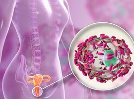 Preventief Lactobacillus crispatus CTV-05 voor bacteriële vaginose
