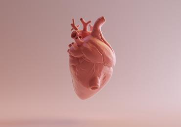 Des scientifiques présentent un prototype de coeur en 3D à partir de tissu humain