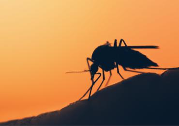 Les touristes belges mis en garde contre la dengue en Thaïlande et aux Philippines