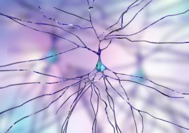 Des chercheurs belges ont élaboré le premier  atlas des cellules» d'un cerveau