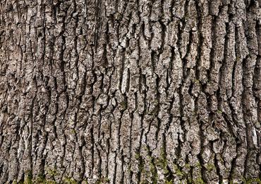 L'Université d'Anvers s'intéresse à l'écorce d'arbre comme remède contre l'hyperactivité