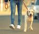 Mensen met een hond hebben een betere overleving na een cardiovasculair event