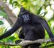 En Chine, des scientifiques implantent à des singes un gène du cerveau humain