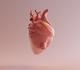 Israëlische wetenschappers 3D-printen miniatuurhart met menselijk weefsel