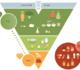 Une nouvelle pyramide alimentaire