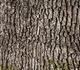 UAntwerpen zoekt 144 kinderen om boomschors te testen als middel tegen ADHD